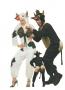 Toro e mucca